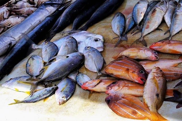 sea food boiler
