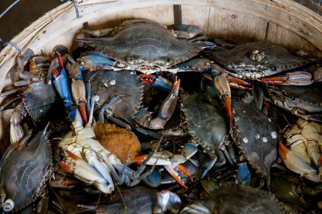 crab for cooking in boiler